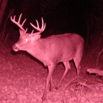 10 pt shows up a month after my first pic of him.